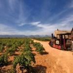 Vino y vías: 5 trenes de rutas vinícolas increíbles