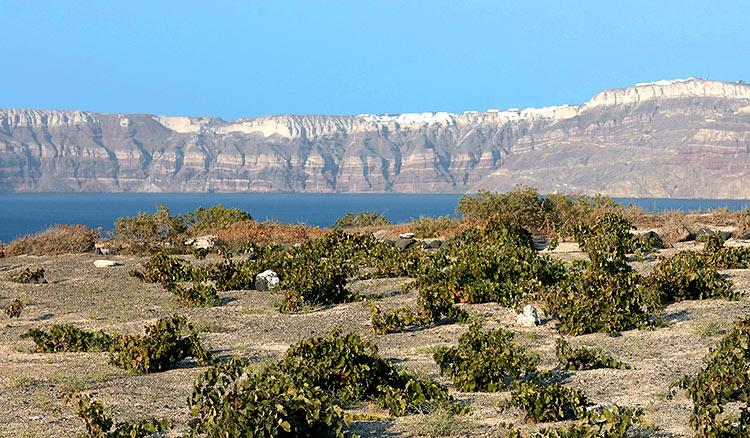 viñedos cerca del mar, santorini