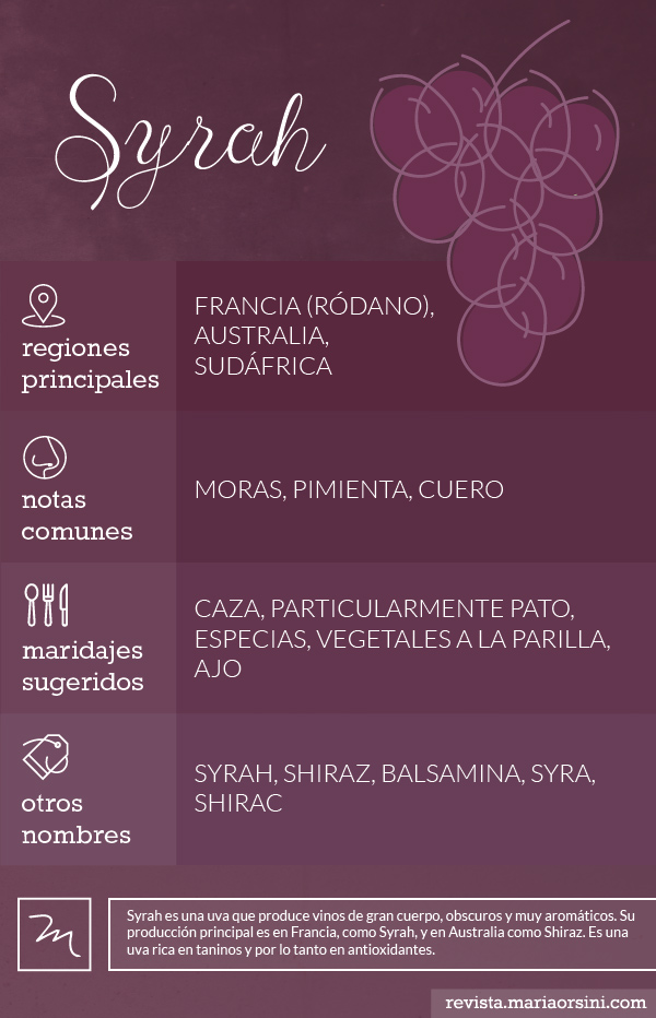 Syrah o Shiraz, todo sobre esta uva en Revista Maria Orsini