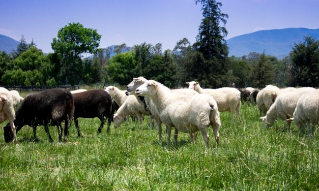 Quesos Casa de Piedra: quesos de oveja 100% mexicanos
