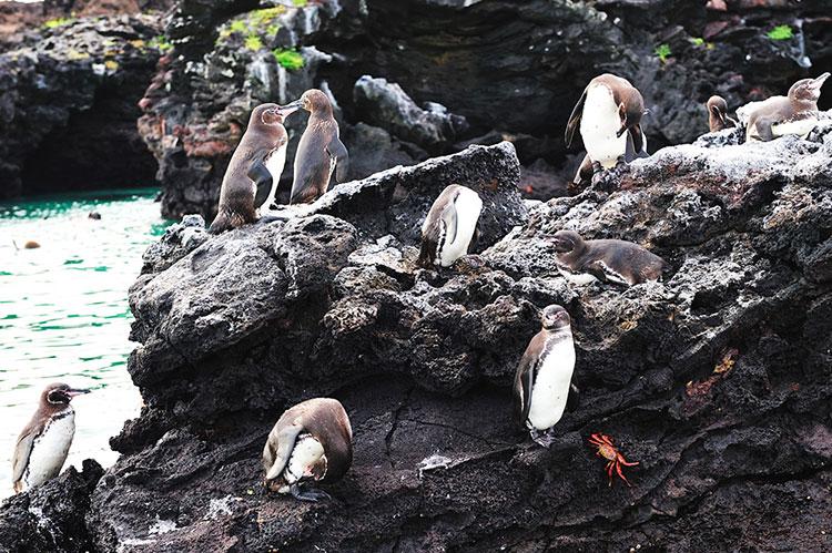 Los mejores Safaris fuera de África: Galápagos |Pikaia Lodge