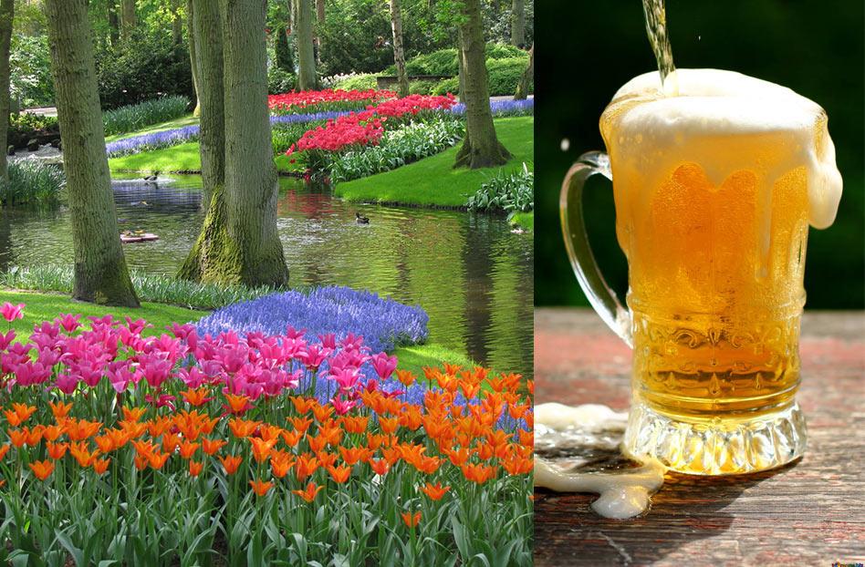 Cruceros para foodies: crucero de cerveza en amsterdam