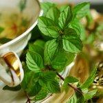 La menta – Herbario