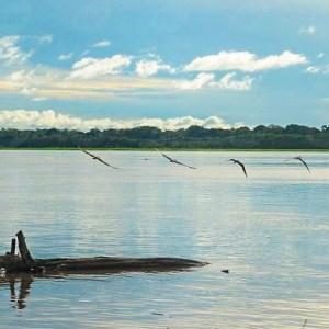 Sínodo especial para a Amazônia será realizado em outubro de 2019