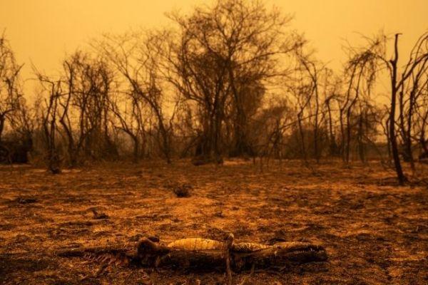La destrucción del Amazonas y el Pantanal, en fotos