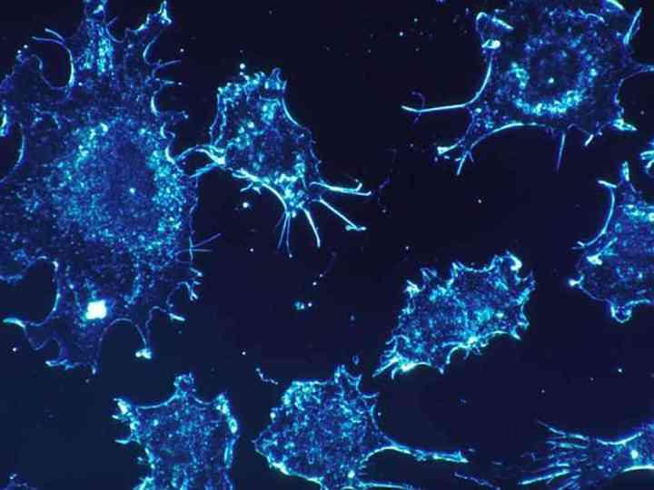 imunoterapie