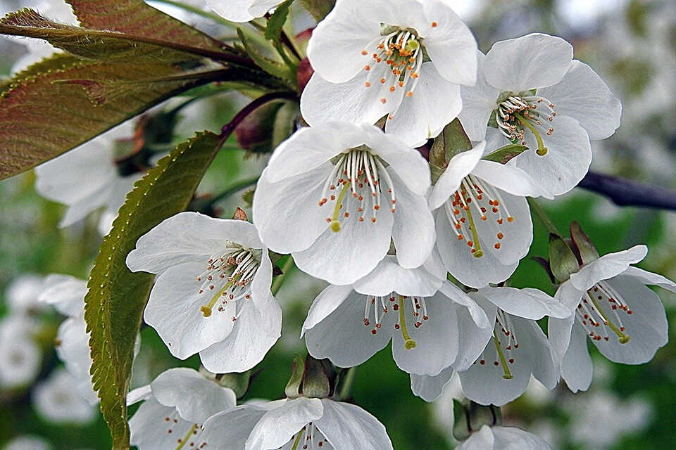 7 soluții împotriva alergiei la polen