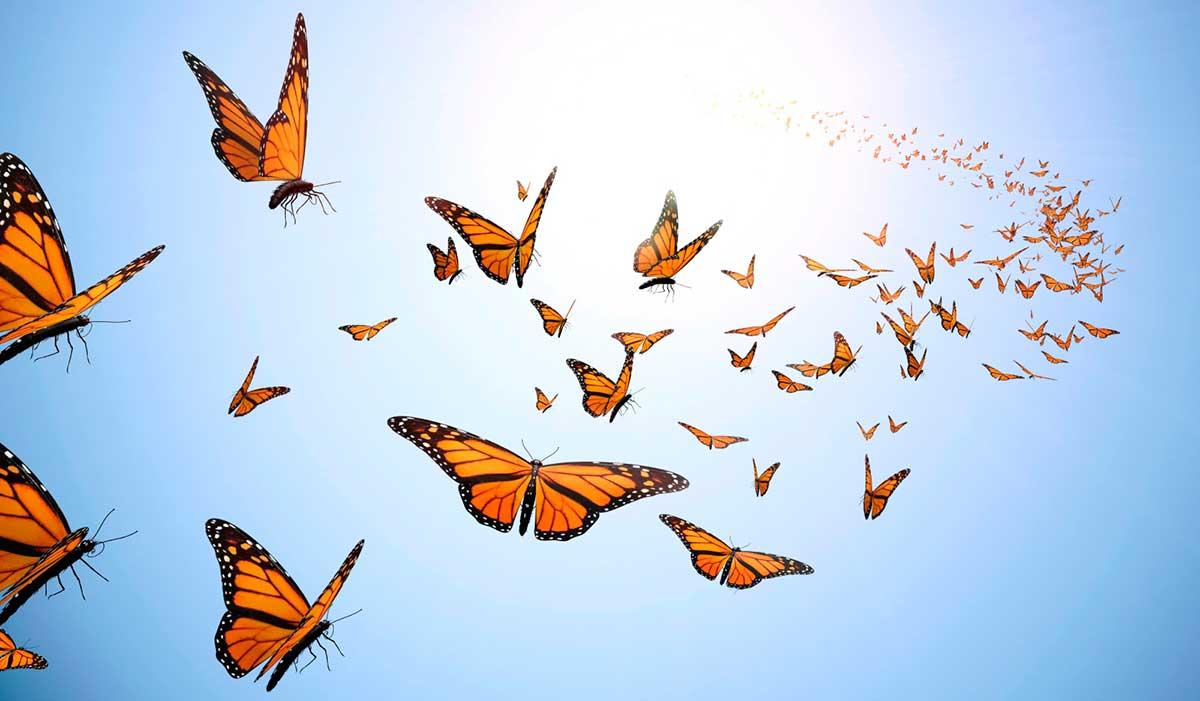 Cuento: Mariposas