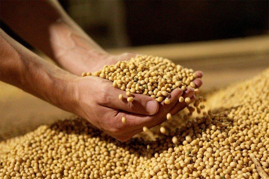 Selo Biocombustível Social gera renda para agricultores familiares -  Revista Capital Econômico