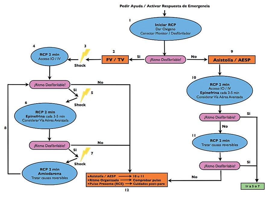 RCP pediátrica y neonatal: Consideraciones especiales y actualizaciones