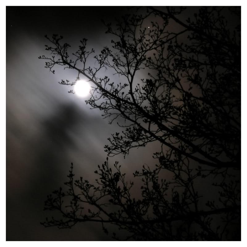 mysterious_night