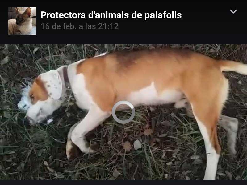 El animal falleció tras ser llevado al veterinario