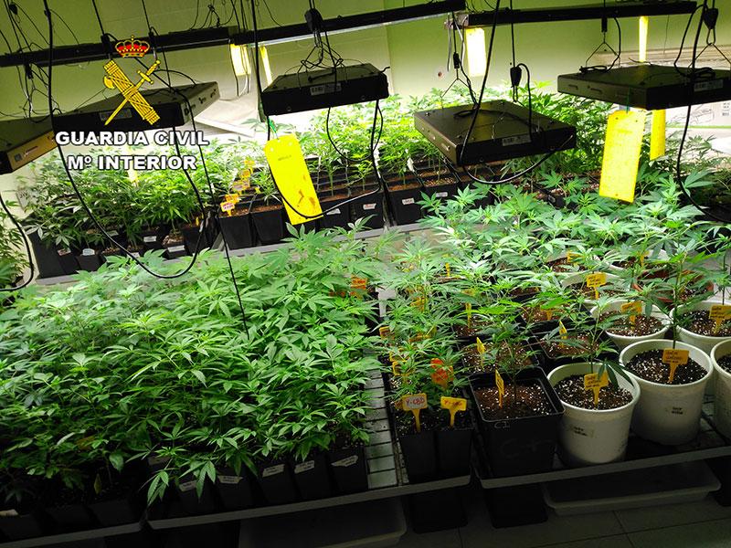 La plantación estaba formada por 1300 plantas