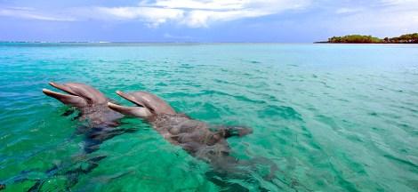 Algunos lugares ofrecen shows con delfines