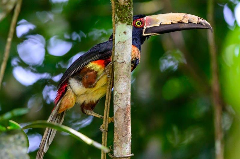 fauna y flora en Colombia