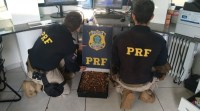 Jovens que transportavam armas e munições em viagem de ônibus são apreendidos pela PRF no Paraná