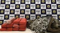 Vídeo: Passageiro de ônibus é preso pela PRF com mochila cheia de entorpecentes na Bahia