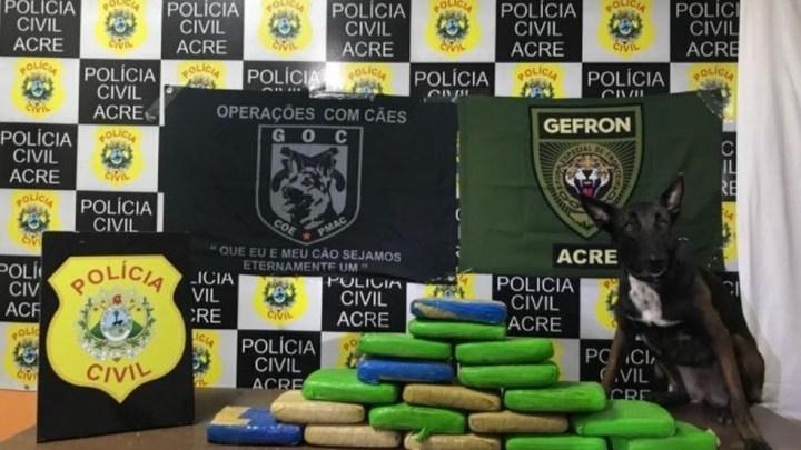 Polícia Civil apreende entorpecentes despachados em ônibus no interior do Acre
