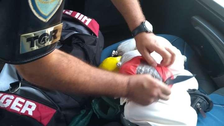 SP: Polícia Rodoviária prende passageiro de ônibus com entorpecentes na rodovia Castello Branco