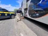 BA: PRF apreende quase 40 munições durante fiscalização em ônibus na BR-116 – Vídeo