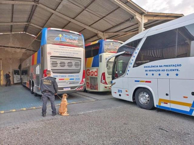 Polícia Federal deflagra operação contra organização criminosa que usava ônibus para transportar arma e entorpecentes - revistadoonibus