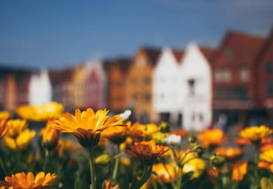 Estudo revela Oportunidades de Negócios no setor Habitacional