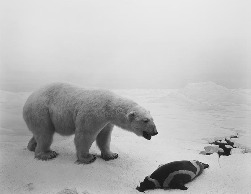 Sugimoto, Hiroshi. Diorama. Polar Bear, 1976