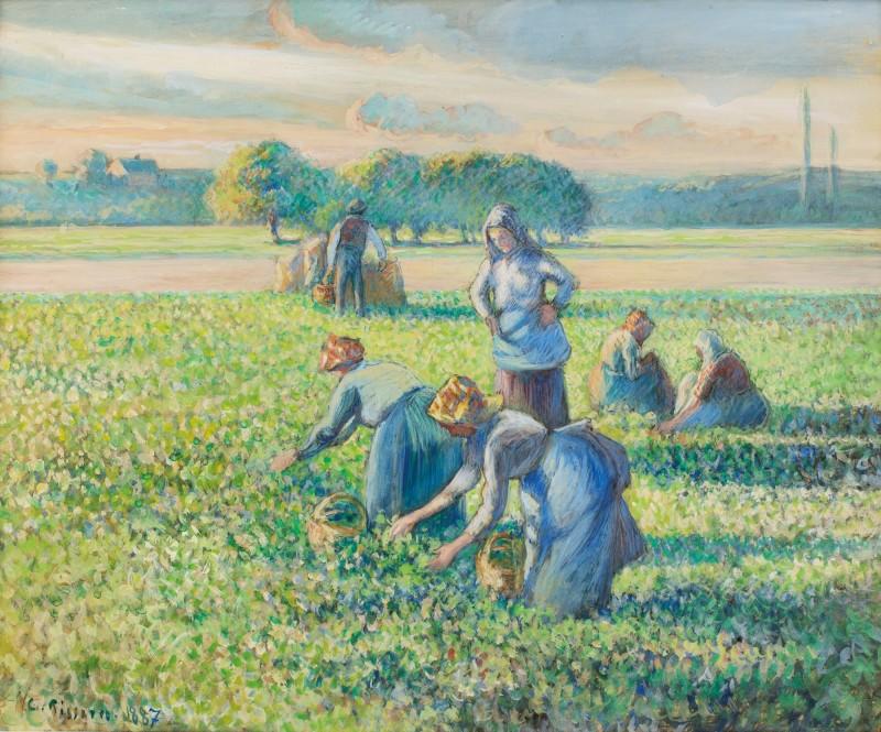 Camille Pissarro La Recolte des pois 1887