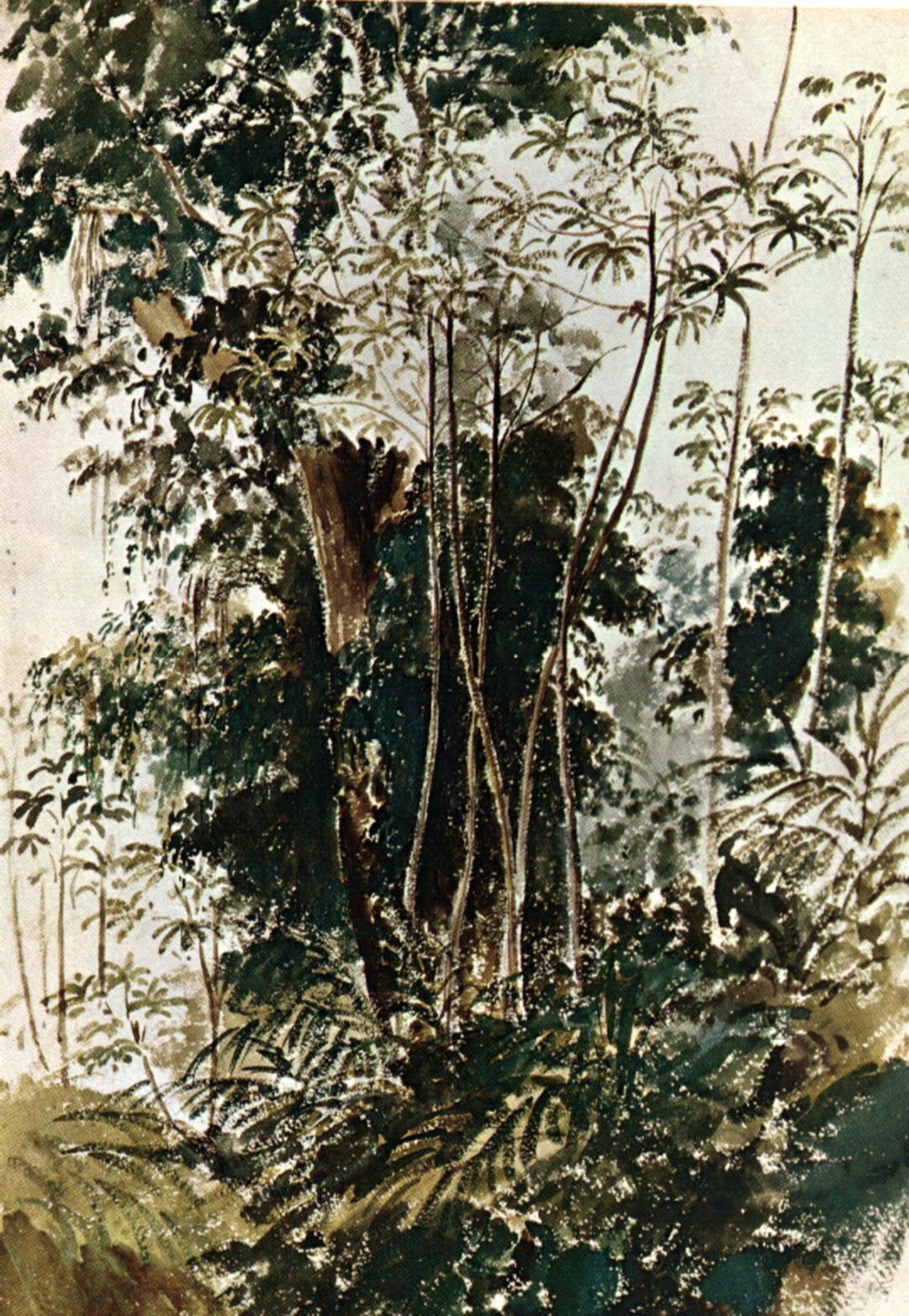 Camille Pissarro. Vegetación Tropical. Sin Fecha. Colección Banco Central de Venezuela. Comprada en Hammer Galleries de New York 1965