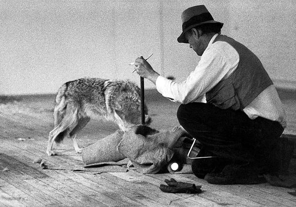 Joseph Beuys. I like America and America likes me, 1974