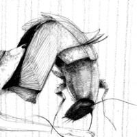 Ladrar mientras se mantiene el aire (animales mexicanos)