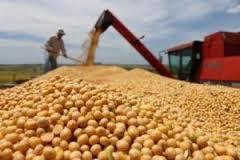 Datos negativos en EE.UU. encienden la mecha alcista para la soja y el maíz.