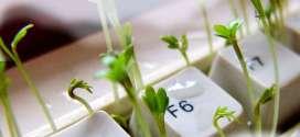 Argentina y Costa Rica inician la certificación electrónica para productos vegetales.