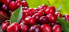 Aumentó 17% la exportación de cerezas con ventas de 5 millones de kilos.
