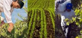 Medio Oriente: bioeconomía y oportunidades de exportación de yerba y otros productos