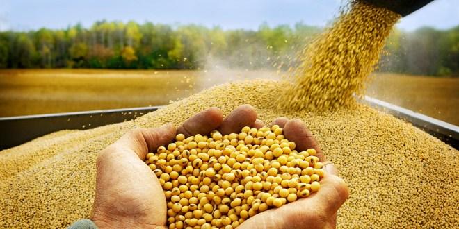 Podrían ingresar US$ 22,5 mil millones en 2021 por exportaciones del complejo sojero.