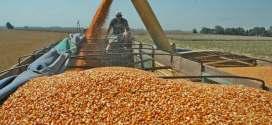 Más controles al agro: el Gobierno exige nuevos requisitos para exportaciones de maíz y hay malestar con los productores.