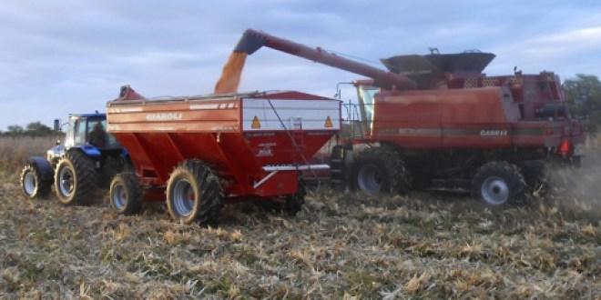 El Urquiza volvió a transportar granos para exportación con la reactivación de dos plantas en Entre Ríos