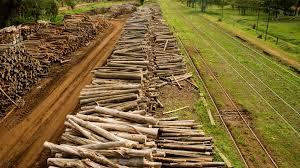 Desde Entre Ríos saldrá la primera exportación de rollizos de madera hacia la India.