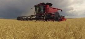 La exportación de trigo llegaría en diciembre a un récord en 30 años