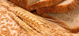 Cada año más cerca: se esperan 50 millones de toneladas de maíz y 55 millones de soja.