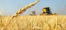 Molineros de Brasil visitaron campos de trigo bonaerenses para evaluar la calidad