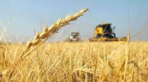 El Puerto de Santa Fe despachó 7.000 toneladas de trigo después de tres años.