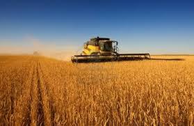 """""""Sólo un 2% de los productores exportan y liquidan en forma directa"""", señalan desde CRA"""