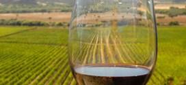 Viticultura. El grupo de bodegas que conquista mercados con vinos orgánicos y biodinámicos.