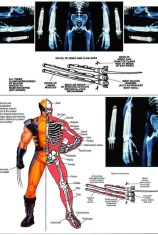 A anatomia de Wolverine - in Stack Exchange.