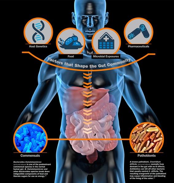 Fatores que influenciam a composição da flora intestinal