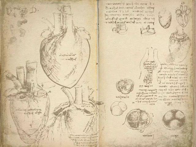 Esboços de Leonardo da Vinci a descrever detalhadamente a estrutura cardíaca, os grandes vasos e as valvas cardíacas