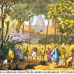 Ilustração dos primeiros imigrantes chineses que vieram cultivar o chá no Rio. Crédito: http://redescobrindoovale.blogspot.com/