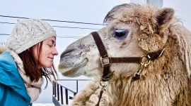 "Cena de ""Artic Camels"" (2019), de Karl Emil Rikardsen. Crédito: Doker - Moscow International Documentary Film Festival."